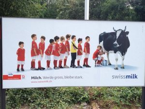 Корова даёт молоко...