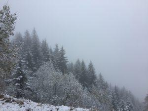 Первый снег...в ноябре