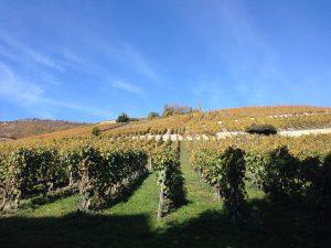 Виноградники кантона Вале